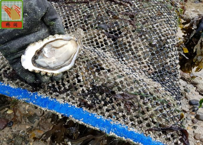 0.915m Width Oyster Nets Aquaculture Netting 700GSM 9MM * 9MM Mesh Size