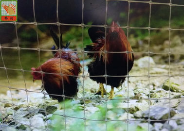 China Transparent Plastic Poultry Netting, Plastic Poultry Netting, Chicken Wire Mesh Fencing, Anti Corrosive supplier