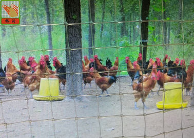 China Plastic Coated Chicken Wire Mesh Poultry Mesh Netting Transparent Color supplier