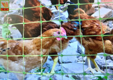 China Multi - Purpose Green Plastic Poultry Netting Chicken Wire Fence Light Weight supplier