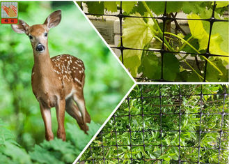 China 1m Height Black Plastic Deer Fence Netting To Protect Plants Hole Size 20mm supplier