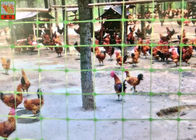 Green Plastic Mesh Fencing For Prevent Birds / Chicken / Pheasant 1 m Wide