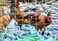 China Gray Color Plastic Poultry Netting Temporary Chicken Fence 1.2m Height 35g / Sqm factory