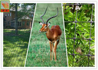 Garden Plastic Deer Stop Netting , Deer Block Netting For Shrubs / Trees Protect