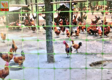 Green Plastic Mesh Fencing For Prevent Birds & Chicken & Pheasant , Plastic Poultry Netting , 1M High , PP Materials